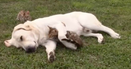 Kitten Nuzzles Under Doggies Paw In Short Video…It's A Touching Moment You Can't Miss, Awww!!