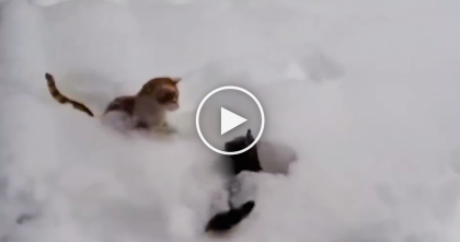Kitties Discover Fluffy Snow, But Just Watch What They're Doing… Their Reaction, SOO Funny!!