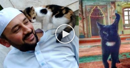 Man Does Something Amazing With His Mosque When He Notices Forgotten Kitties In The Cold…