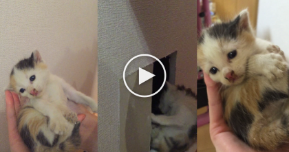 Man Hears A Kitty Cry From Somewhere In The Wall, Then Cuts A Hole To Find This…