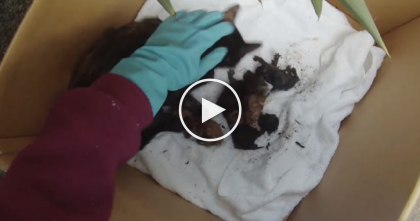 Man Hears Cries From Backyard, But When He Goes To Investigate… Just WATCH What He Finds!!
