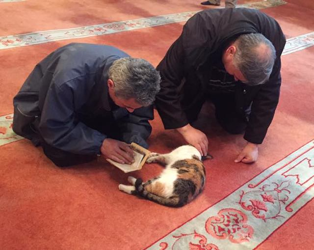 mosque-kitties-opens-hearts-and-doors-to-cats