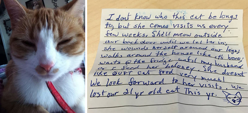 note-attached-to-cat-that-came-home