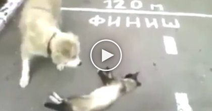 Poor Dog Thinking Cat Is Dead, But Then Gets The Most Unexpected Surprise… Just Watch.