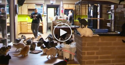 She Lives With 1,100+ Cats, But Take One Step Inside Her House… WOW, Would You Live Here?!