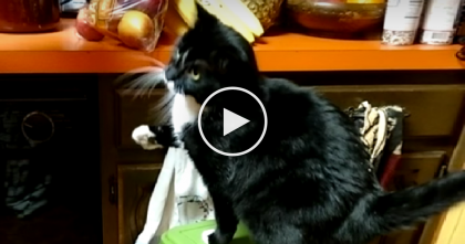 She Says Commands To Her Cat, But See The Cats Response… I Didn't Expect That!