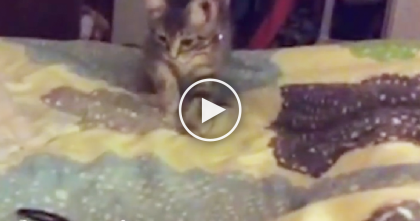 These Kittens Try To Grow Up, But When You See What They Do… It's A Cat-tastrophy, LOL!!