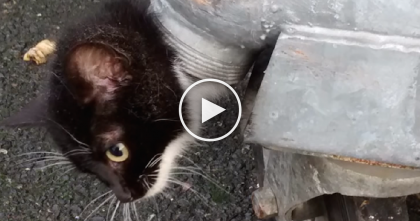 They Noticed Something Black Sticking Out Of A Garbage Bin, But When They Got Closer…