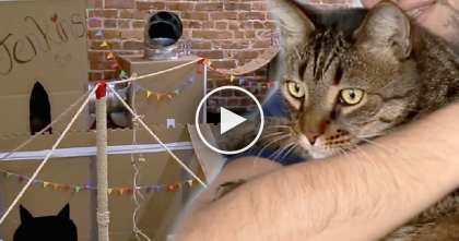 They Used Cardboard Boxes To Create The Worlds Greatest Cat Fort…And You've Gotta See It!