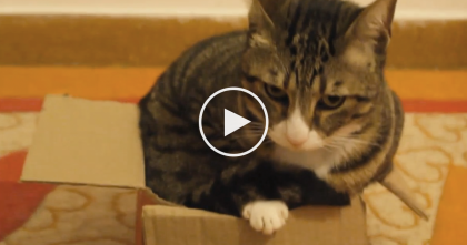 This Determined Cat Fits Into The Most ImPawssibly Small Box Ever… Just WATCH And See!!