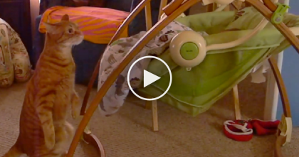 When Kitty Sees Baby In A Swing, Keep Watching To See What He Does… SOO Cute!!