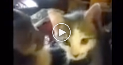 Monkey Discovers Little Kitten For First Time…His Reaction Is Just PRICELESS, Awwww!