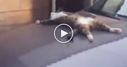 He Thought This Cat Was Dead, But When He Took A Closer Look… OMG, What In The World?!