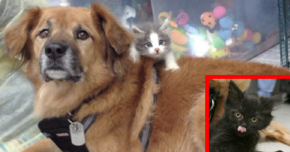 He Was Rescued During Hurricane Katrina, But When You See What He's Doing Now? WOW…