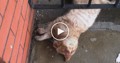 He Was Shocked When He Saw A Frozen Cat On His Porch, But Then He Noticed Her Paw…