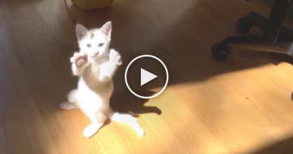 Kitten Has A 'Epic battle' With The Sun, But Just Watch To See Who Wins… This Is Very Cute!