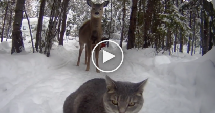 Kitty Walks Right Up To Unexpected Visitor, But Then… Now Watch The Cats Reaction.