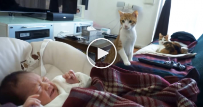 New Member Of House Arrives Home, But When Kitty Sees It? His Reaction Is Just…You Must See It!