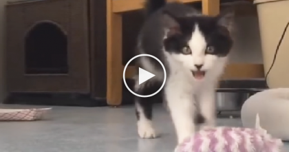 People Euthanize Cats That Do THIS, But Take A Look At Her Face… How Could You Resist??