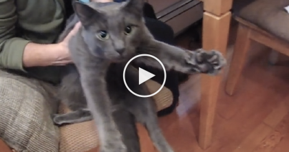 She Gives Her Kitty Some Loving Attention, But Watch And See His Reaction… SOO Adorable!!