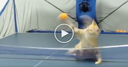 When This Kitten Jumps On The Pingpong Table… Just Watch What He Does, WOW.