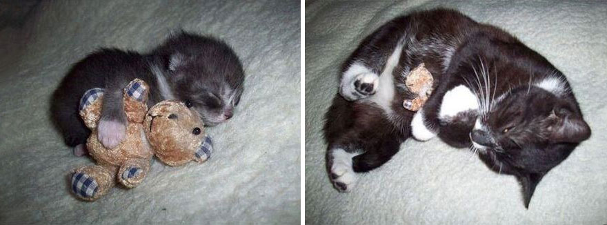 14-before-and-after-growing-up-cats