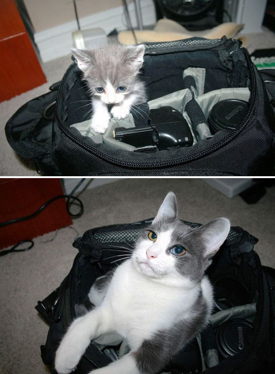 7-before-and-after-growing-up-cats