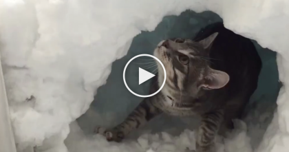 Adorable Cat Is Building A Mini Igloo In The Snow, But Watch His Response… LOL!!