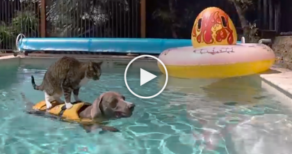 Cat Hangs Out With Doggie In The Most Unusual Way Ever… Now Watch What He Does