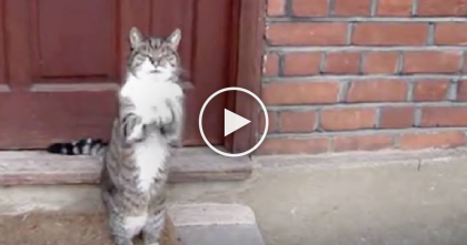 He Wants To Come Inside, But Just Watch His Paws… OMG, That's Too Cute!