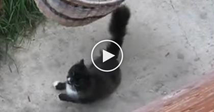 Cat Starts Meowing For Owner, But Keep Watching Till 0:23… I Never Expected This, GENIUS.