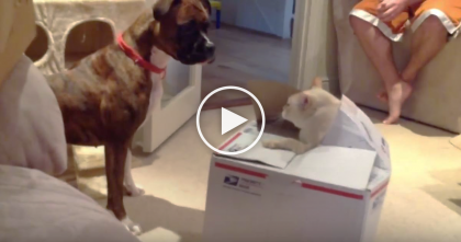 Dog Keeps Staring At Cardboard Box, But Then… The Cat Completely Shocks Everyone!