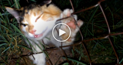 He Heard Desperate Meowing, But When He Discovered What It Was… My Heart Stopped.