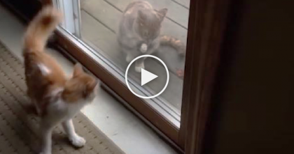 Cat Tries To Befriend Another Cat On The Other Side, Now Watch His Reaction