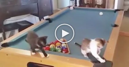 Kittens Discover A 'New Toy', Now Watch What They're Doing… This Is Just TOO Funny!