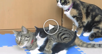 Kittens Need A Bath, And There's NO Getting Out Of It… Now Watch What Mom Does, LOL