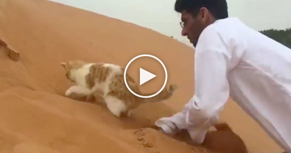 Kitty And Human Visit A Sand Dune, But Watch The Cat's Reaction… SOO Cute, OMG!!