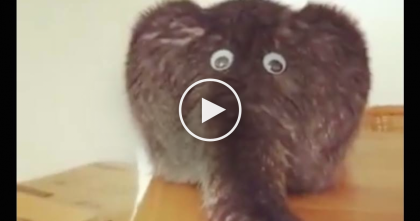 Kitty Has Two Extra Eyes, But Watch And See His Tail…You Won't Believe What It Really Is, LOL!!