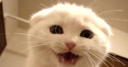 Little White Kitten Meows For Some Love…Watch For 5 Seconds And Your Heart Will Melt!