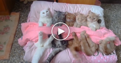 She Gets Her Cats Ready For Bed, Now Watch How She Does It… Can You Believe It?!