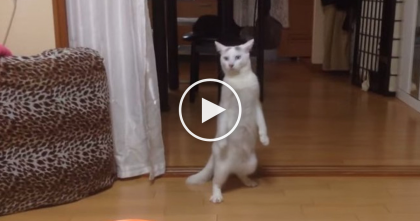 She Says Something To Her Cat, But Keep Watching To See What Comes Next… OMG?!