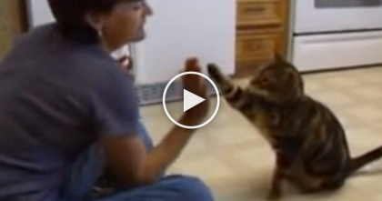 She Tells The Cat To Do Some Dog Tricks, Now Watch The Cat… I Can't Believe This.