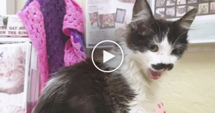 Take One Look At This Cat And You'll Instantly Fall In Love… Oh. My. GOODNESS.