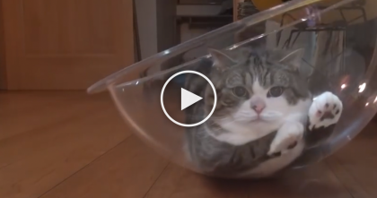This Cat Finds A New Place To Lay, Now Watch What He Does With It… TOO Cute!