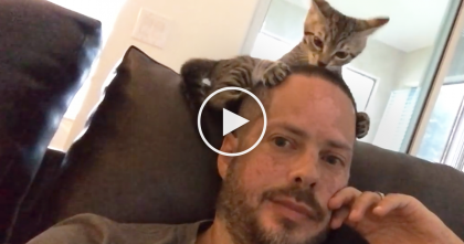 This Kitten Gets SOO Excited About His Human, Now Watch What Happens Every Night!