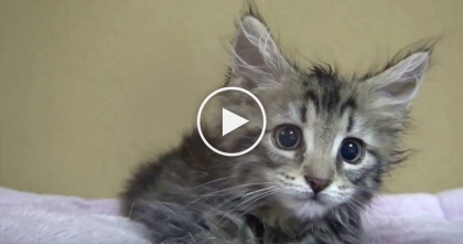 Tiny Kitten Can't Believe It's Playtime, Now Keep Your Eyes On The Lump In The Bed…LOL!!