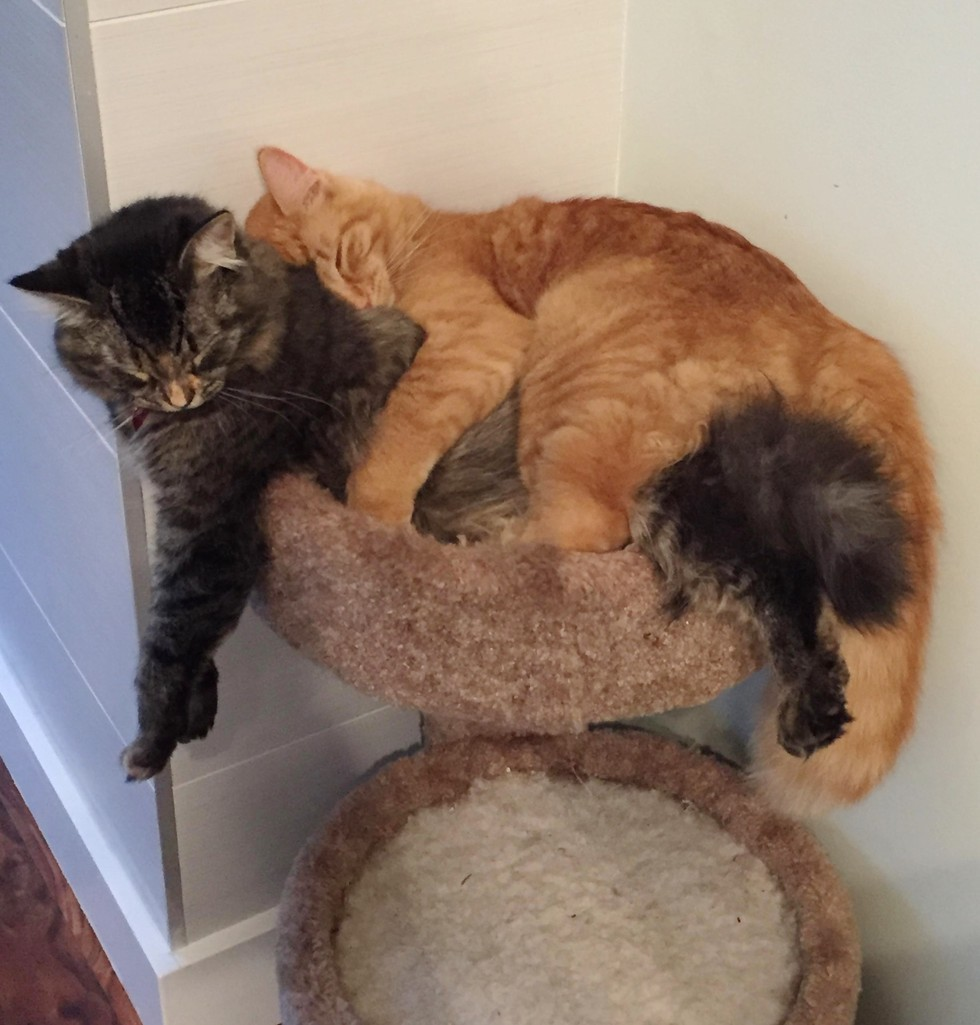 6_Cats_Sharing_Tiny_Bed