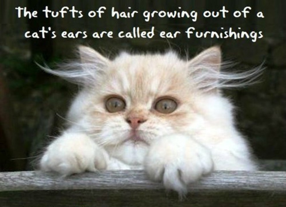 8_Cat_Ear_Furnishings