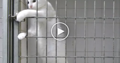 Watch What This Cat Does When He Wants To Get Out Of His Cage… I NEVER Expected To See This!
