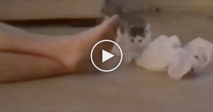 Cat Walks Over And Smells His Feet, But Watch The Cat's Reaction… OMG, Too Funny!!